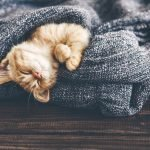 4 Things to Think About When Choosing Your Cat