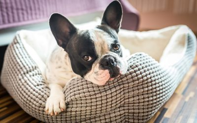 5 Pet Items You Should Never Buy Used