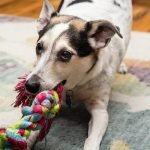 Toys That Stimulate Your Dog's Brain