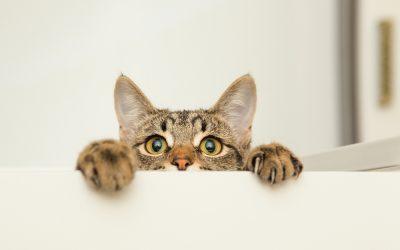 Training and Rewarding Good Cat Behaviour