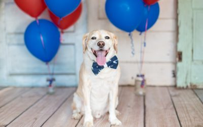 How to Keep Your Dog Calm During 4th of July Celebrations