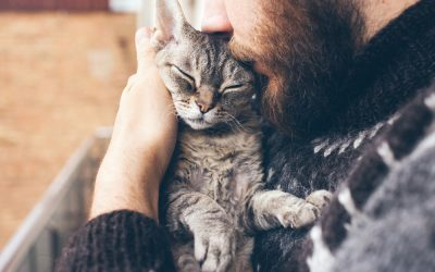 Top 5 Ways to Keep Cats Active and Healthy