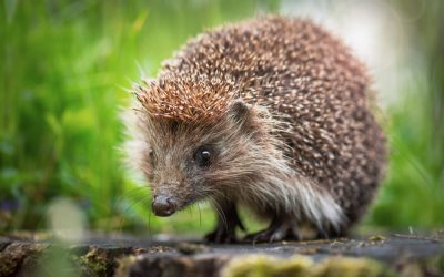 10 Tips for Protecting Wildlife