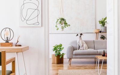 5 Pet Friendly Interior Design Tips