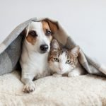 The Cat-Dog Relationship: Five Sure Fire Ways to Facilitate New Cat Dog Relationships in Your Home