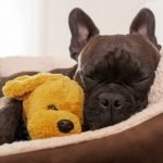 Top 5 Considerations When Purchasing a Dog Bed