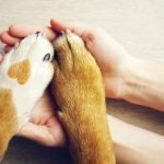 Pet Shelters – Could You Get Involved?