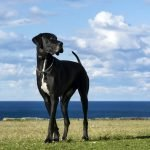The Top 5 Craziest World Records set by Dogs