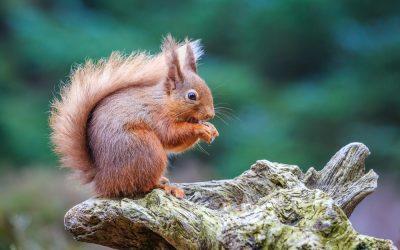 Britain's Surprising Endangered Species