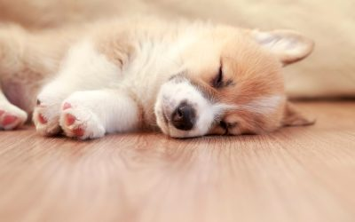 Install Hardwood Flooring that Will Stand Strong against Pet Claws