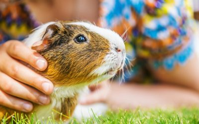 Easy and Low-Maintenance Pets That Are Great for Kids