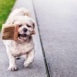 Pet Friendly House: Tips & Decorating Hacks