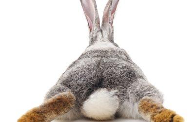 Litter Training a Bunny