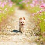 Eco-Friendly Dog - Living Sustainably
