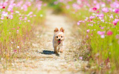 Eco-Friendly Dog – Living Sustainably