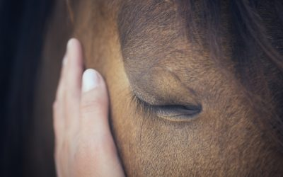 The Horse Beginner