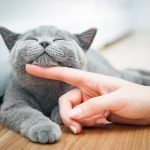 Choosing A Cat Breed For Your Household