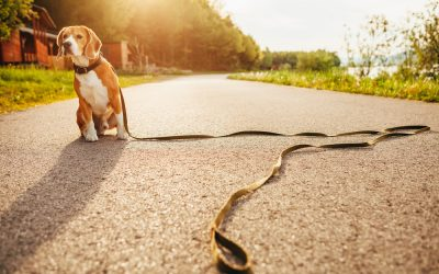 Protect Your Pet Before It Goes Missing