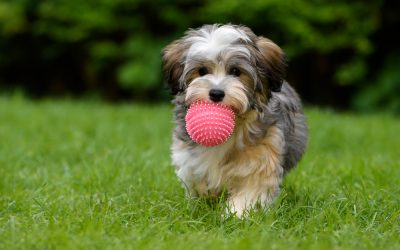 Train Your Growing Pup: Challenge Them With Fun