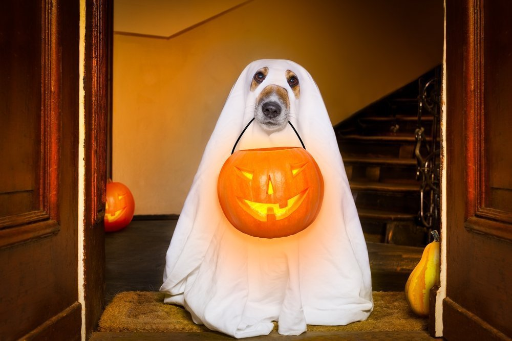 Halloween gifts for dogs