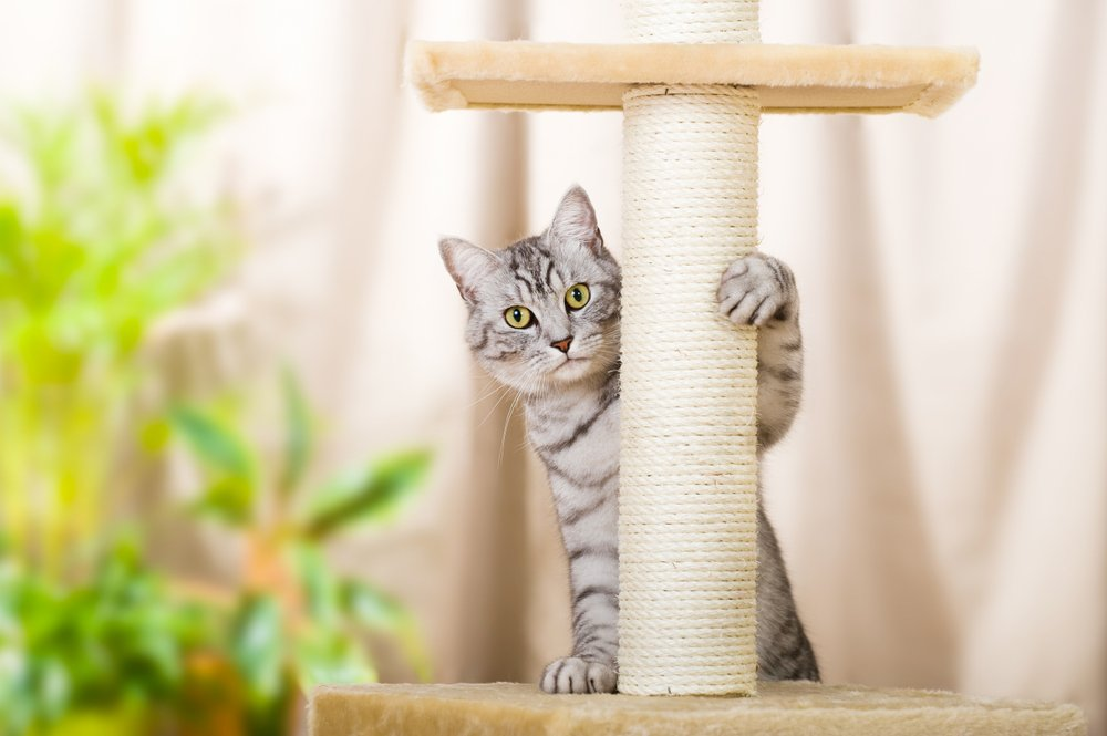 is cat declawing bad