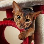What Are The Best Cat Scratching Posts?