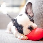 Tips for Puppy Care for the New Parent